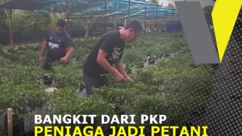 Bangkit dari PKP, peniaga jadi petani